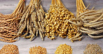 Полба — полезный аналог пшеницы. Как готовить кашу и хлеб — рецепты