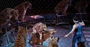 California Governor Signs Fur Sales, Circus Performance Bans