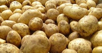 Как обрабатывают картофель