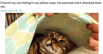 Cats Who Lost The Ultimate Game Of Hide-And-Seek