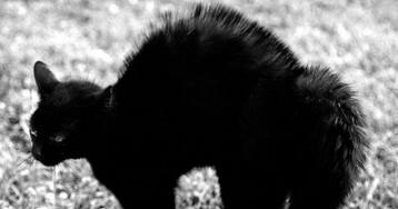 Чоловік 70 років фотографував кішок - фото