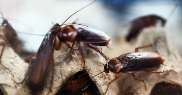 Brazilian Man Accidentally Blows Up Lawn Trying to Eliminate Cockroach Problem