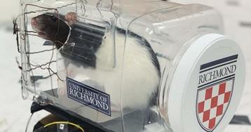 Ученые научили крыс управлять крошечными автомобилями