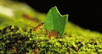 Коллективное движение: как ученые муравьиные пробки изучали