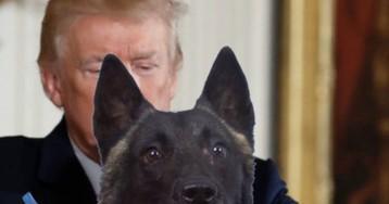 El perro de la operación contra Al Bagdadi se llama Conan y visitará la Casa Blanca la próxima semana