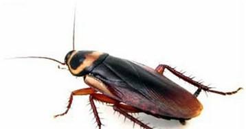 9 фактов, которые вы не знали о тараканах