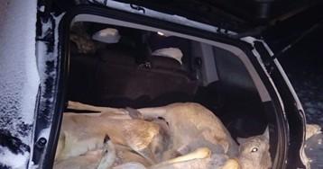 Курганский суд закрыл дело тюменского браконьера-единоросса Красноштанова