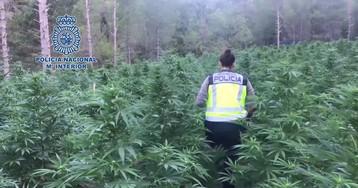 Seis detenidos y 16.000 plantas de marihuana incautadas en Aragón