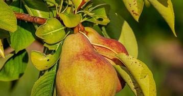 Диетологи назвали самый полезный для кишечника фрукт