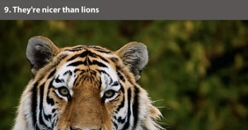 Facts About The Gorgeous Murder Floofs Known As Tigers