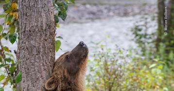 Лучший фотограф дикой природы: топ-10 впечатляющих снимков конкурса