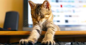 В сети появился новый звездный кот