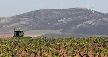 Las ventas de vino crecen a costa de bajar los precios
