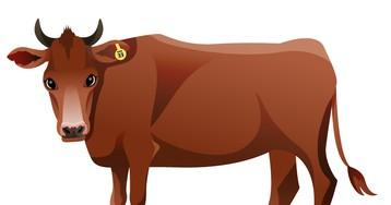 Анекдот про новый способ как убить быка