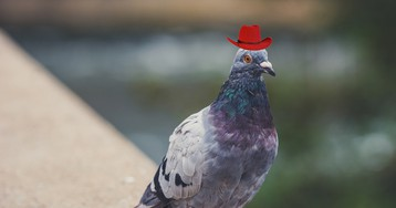Someone in Vegas Glued Cowboy Hats to a Bunch of Pigeons' Heads