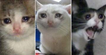 Плачущий кот: котик плачет и орет - откуда мем? Варианты мемов