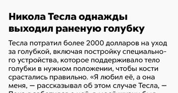 Никола Тесла однажды выходил раненую голубку