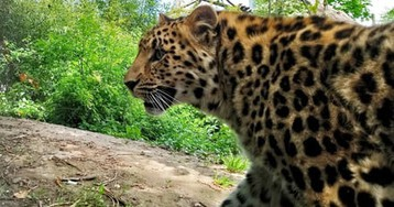 Google is monitoring animal populations with a giant network of wildlife cameras