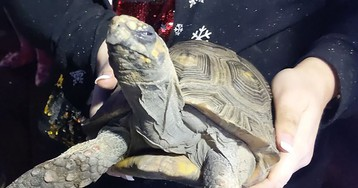 'Angry' tortoise, 45, rescued after starting Christmas Day house fire in England