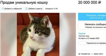 В Новороссийске продают уникальную кошку за 20 миллионов