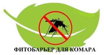 Нет комарам! Обзор антимоскитных «фитобоеприпасов»