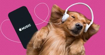 Как скачать музыку на iPhone: 6 простых и бесплатных способов
