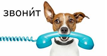 ЗвонИт или звОнит: как правильно поставить ударение в слове звонит?