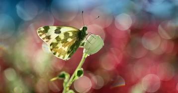 Возникновение жизни. Как и когда появилась жизнь на Земле?