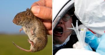 Хантавирус - что это и чем опасен? В Китае от него умер пассажир автобуса