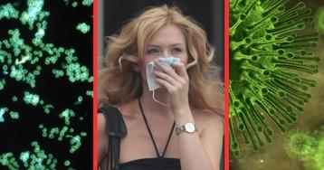 Бактерии и вирусы: в чем разница и что опаснее? Вирусные инфекции и человек