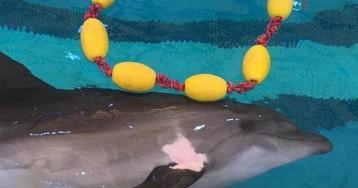 Через коронавирус в Россию из Ирана прорывается черноморский дельфин Кася