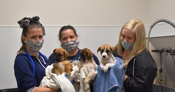 Three Abandoned Puppies Rescued Following Louisiana Street Dog Shootings