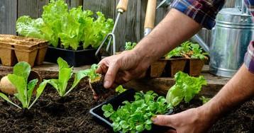 Новый подход: как вырастить большой огород и сэкономить