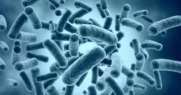 Бактерии: что это такое, где находятся и как устроены. Польза и вред бактерий