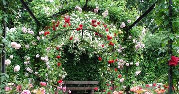 Сады Рапперсвиля