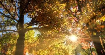 Sunrays through the gardens