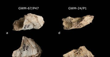 В Эфиопии нашли два новых вида вымерших приматов
