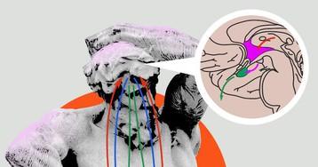 Нейроэндокринные оси общего адаптационного синдрома