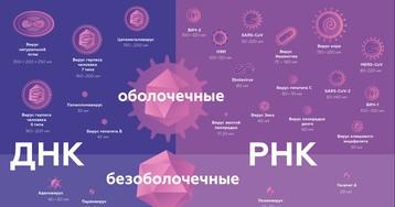 Механизмы вирусного заражения