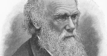 """Чарльз Дарвин: биография, научная деятельность, """"Происхождение видов"""", идея эволюции"""