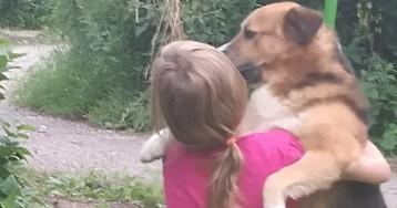 В Вышнем Волочке бездомный пес Ашот ценой жизни спас ребенка