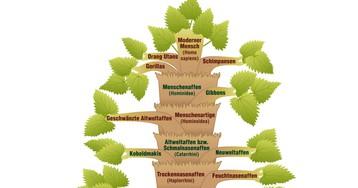 Филогенез: что это, история термина, значение в биологии и психологии