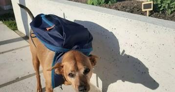 В Италии наградили собаку за помощь во время пандемии
