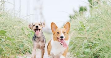 Названы лучшие собаки для горожан