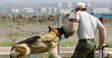 В Петербурге полицейский пес Волк Меркурий спас девочку от насильника