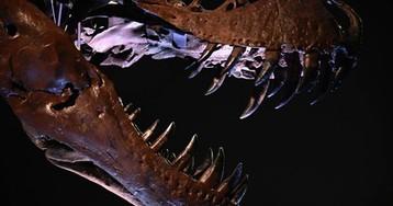 На аукцион выставили крупнейший скелет тираннозавра - он бродил по Земле 67 млн лет назад/Вместе с хвостом длина окаменелости составляет 12 метров