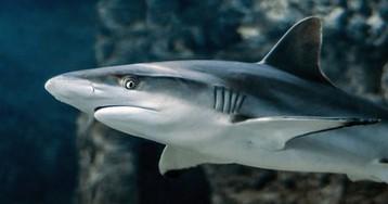 """Британец поймал """"рекордную"""" акулу, но зарегистрировать свой улов как рекорд не сможет - вот почему/Это один из самых агрессивных видов акул, который представляет опасность для человека"""