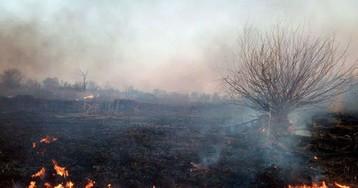 За сутки пожары уничтожили экосистемы Запорожской области на площади в 10 футбольных полей