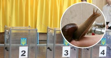 Под Запорожьем подросток украл избирательную урну, чтобы сделать домик для улиток (фото)