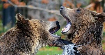 Злобные медведи на глазах у туристов растерзали смотрителя зоопарка